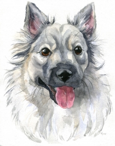Animal Portraiture With Watercolour
