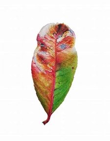 Painting Realistic Leaves in Watercolours