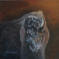 Bison from Yellowstone Park  -  Acrylic