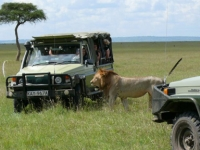 On Safari in Kenya - one of our many photos