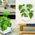 Acrylic Plant and Flower Painting Workshop